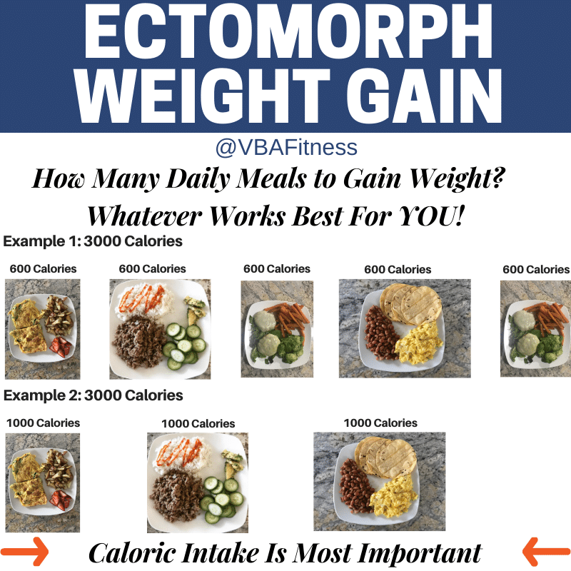 ectomorph diet meal frequency
